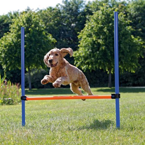 Dog Agility Hurdle