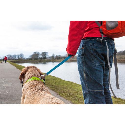 Photo of dog wearing the Ruffwear Headwater Leash.