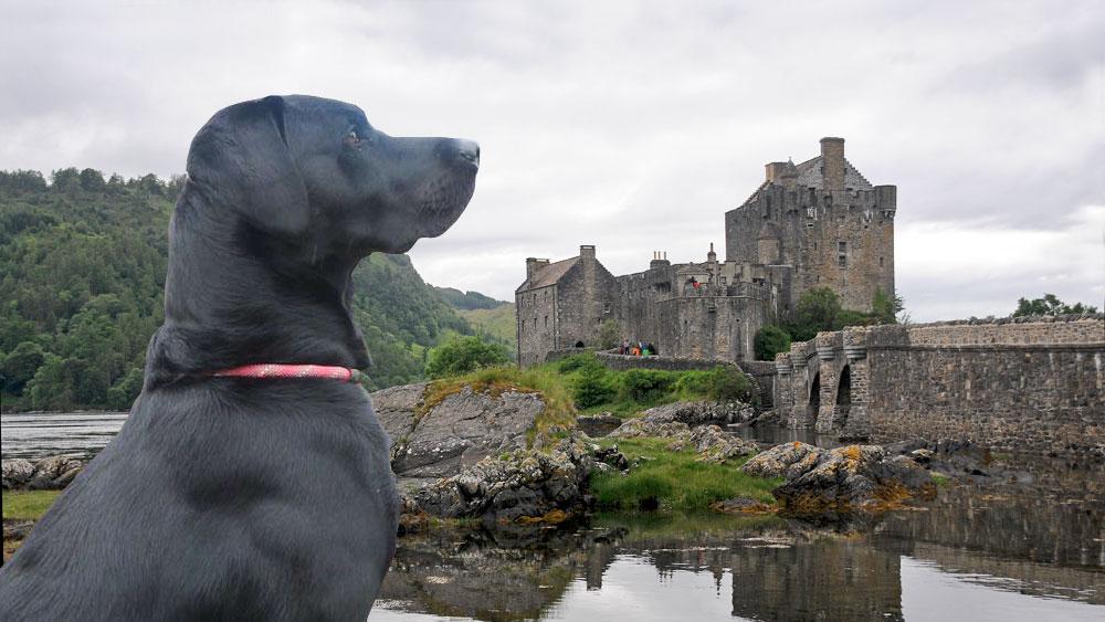 Oscar at Eilean Donan Castle